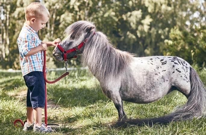Meet Bombel the Smallest living horse male