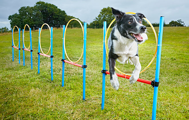 Fastest 10 hoop/tyre slalom by a dog