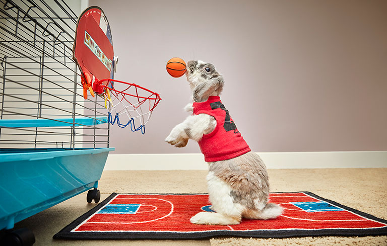 Most basketball slam dunks in one minute by a rabbit