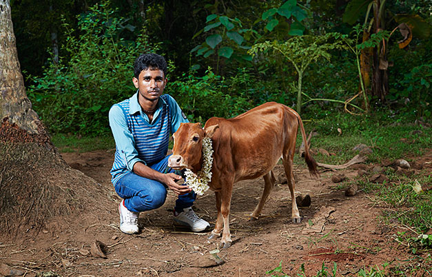 Shortest cow (height)